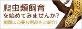 bnr_firstreptiles2016_220x80.jpg